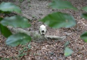 Skull in the Foliage by gothicpoizonivy