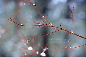 Wintry Branches by RavenMoonDesigns