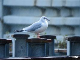 Seagull In The Rain by wolfwings1