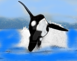 Willy Jump by Dolphingurl21stuff