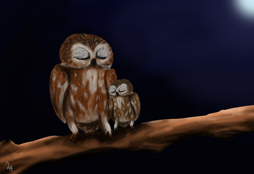 Owls by LinneaAmadis