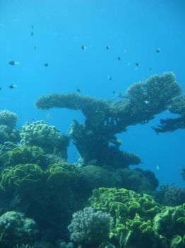 Coral Reef by Stock-Heil