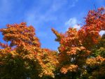Autumn Leaves by shadowed-light-waves