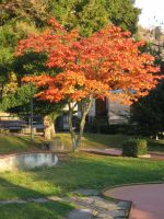 The Red Tree by Olgola