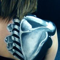 Close up - Anatomical shoulder blade and vertebrae by larahawker