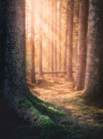 Into the forest by streamweb