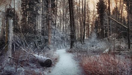 Path of the Fallen Trees II by Pajunen