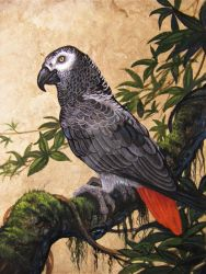Rain Hawks African Gray Finished by HouseofChabrier