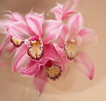 pink orchid by LiLen