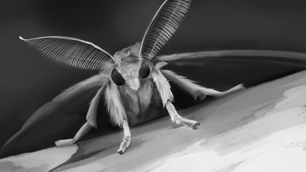 Practice Speed Painting - Gypsy Moth by PencilMuseYouTube