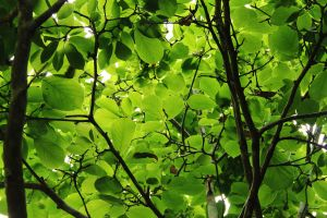 Looking up at the Canopy by BilbyPDalgyte