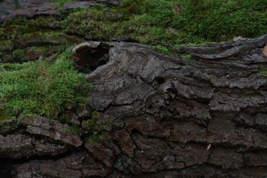 Rotten Trees No. 2 by Amaries-stock