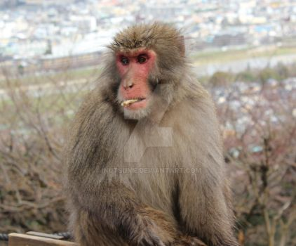 Monkey in Arashiyama by InuTsume