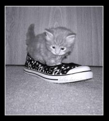 A Kitten Who Lived in a Shoe by Beika