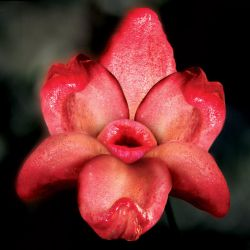 Tongues of flower by NoDate