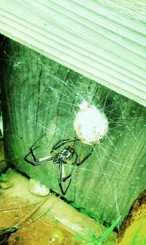 spider with filter and eggsack by anonymousoblivion