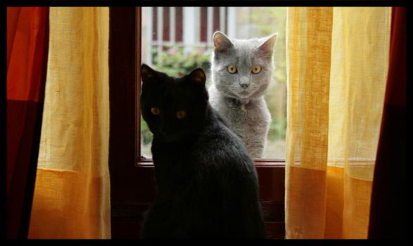 2 cats by 11st