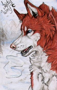 ACEO #30: Cold days by SaidyWolf