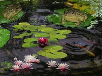 Frog Pond by Shirley-Agnew-Art