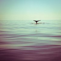 A Whale by Lukasio