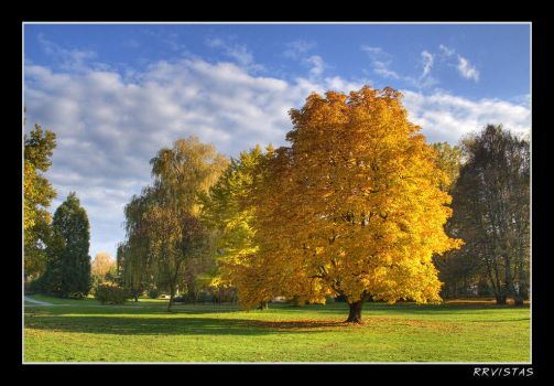 Autumn Gold by RRVISTAS