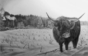 Highland Cow Drawing  by ianmckendrick