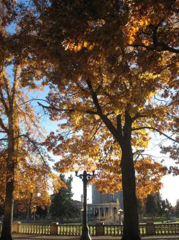 Fall At Civic Center Park by denverart