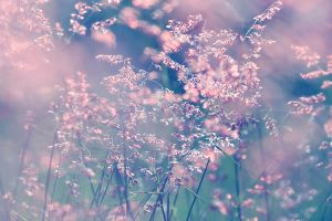 When the wind turns pink.. by incredi