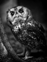 Owl I need is you by LisaAnn1968
