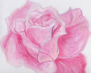 Roses are sometimes pink by yumedreamer
