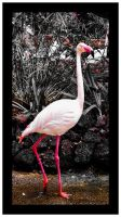 FLAMINGO 3 by IME54-ART