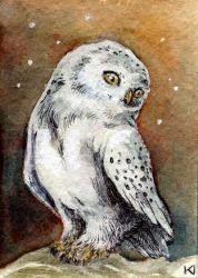 Little white owl Aceo by Kaos-Nest