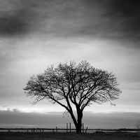 Only a tree by laurentdudot