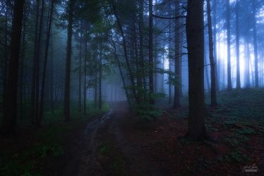 -Evening cloak of the forest- by Janek-Sedlar