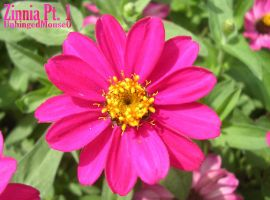Zinnia Pt. 1 by UnhingedMouse0