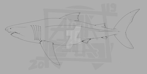 Carcharocles megalodon (lineart)