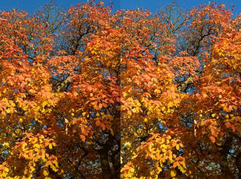 The Full Autumnal Glory Of The Chittam Wood At Kew by aegiandyad