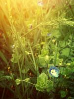 Early spring by Ksenia-B