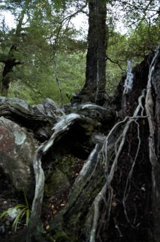 Rivendell 4 - roots and trees by starsong-photo