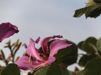 Photograph of flower and bee by rhoar