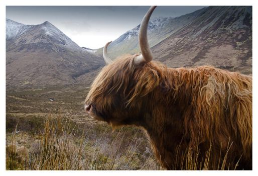 hairy coo by H8BTalways