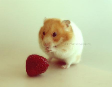 Bless O' Lord this strawberry by akreon