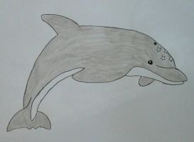 Ecco The Dolphin by JQroxks21