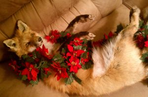Wrapped in Garland by Payasa