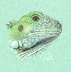 Young iguana by Winfred-S