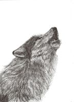 Wolf Ink Pen Drawing 2 by dizzywater