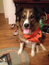 Cookie's Halloween Bandanna by Cosmic--Chaos