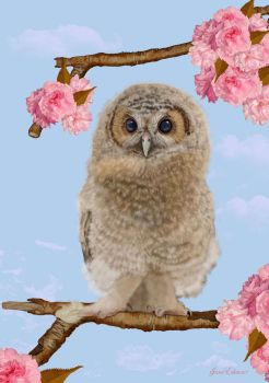 Baby-Owlet-in-a-Blossom-Tree- by JaneEden