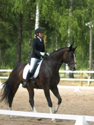 dressage warmblood by wakedeadman
