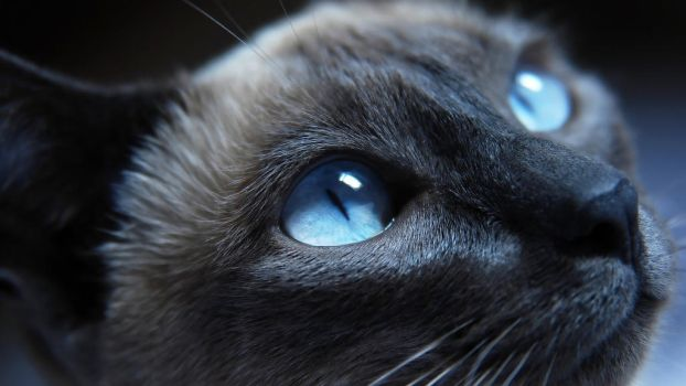 Cat Eyes by gawrifort